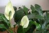 Toilettage écolo pour plantes d'intérieur.