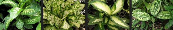 Les plantes toxiques: il faut faire attention aux enfants !