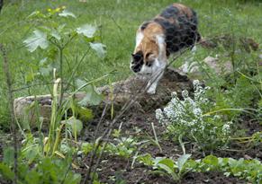 Répulsifs naturels pour chat !