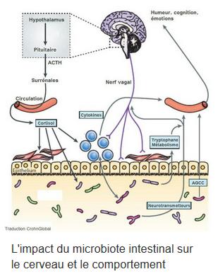 Comment la flore intestinale impacte notre cerveau.