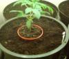 Astuce pour rempoter une plante plus facilement.