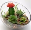 Astuces pour mettre des plantes en valeur.