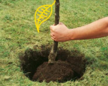 astuces pour choisir et planter un arbre dans un jardin blog de monique bouilliez. Black Bedroom Furniture Sets. Home Design Ideas