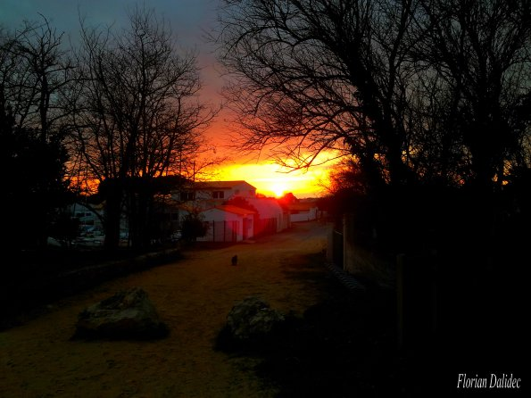 16 février 2012 !!! à côté de la maison, promenade en fin de journée avec Canelle ....