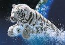 Photo de tigre57430