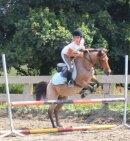 Photo de cheval-poneydu22