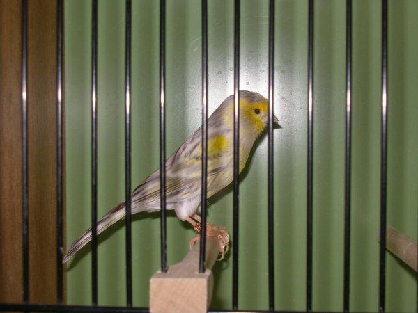 Achat topas gelb mosaik Typ II