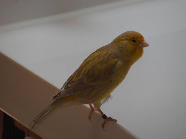 Isabell gelb schimmel