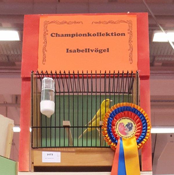 Kopfvogel Championstamm