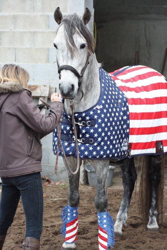 Américain Horse !