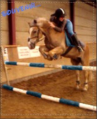 Il y a deux ans.. J'ai Déconnée , J'ai arreté l'equitation , Ma passion , Ma vie ... et j'ai tous vendu ! Je regrette enormément ! Je Me rend compte , Maintenant , deux ans plus tard .. que j'ai Bousilée 10 ans de travail dans le monde des chevaux ! Rien qu'a y pensé , j'en pleurs ! Ca me manquee ! Je n'aurais jamais du arreté et  ca je le sais , mais maintenant ces trop tard ! Trop de chose se sont passée durant ces 2 derniere année .. Si  Seulement Je pouvais remontée le temp ! (u)