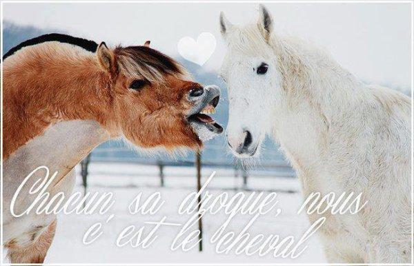 Mon blog sur les chevaux <3