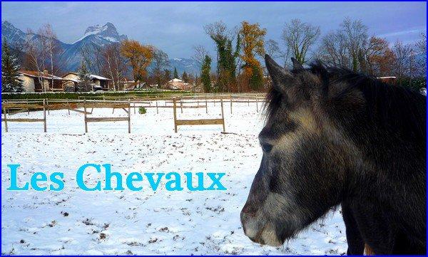 »  Les chevaux & les poneys C & D