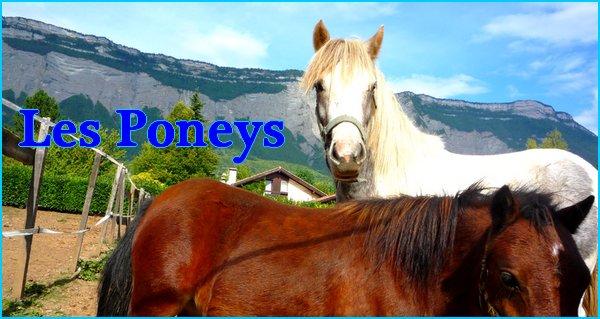 »  Les poneys A & B