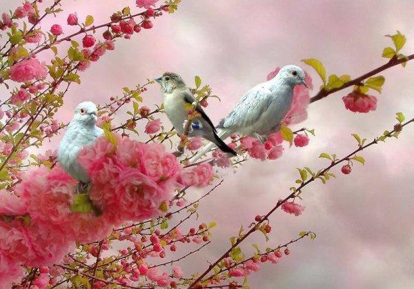 Ses bientôt le printemps