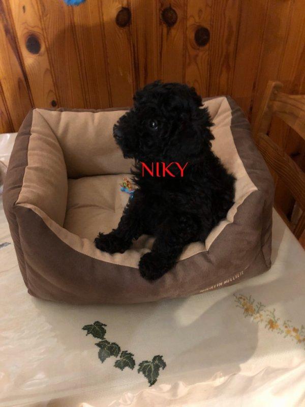Voici Niki le bon petit diable