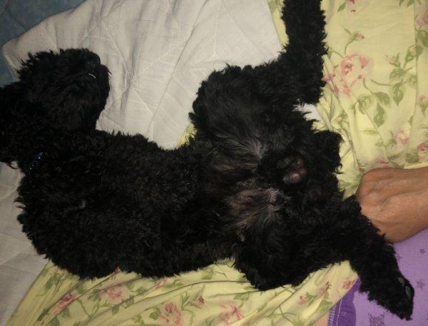 Nicky fait la sieste