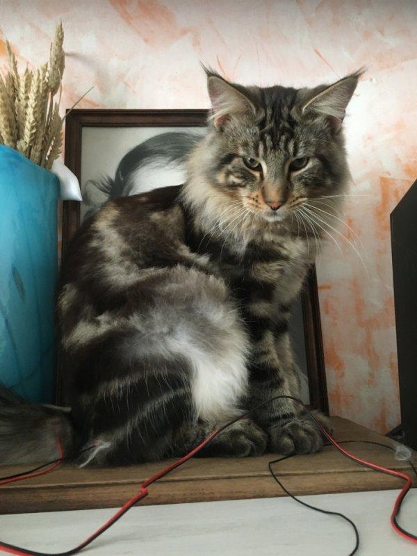 Le chat vouky comme il beau