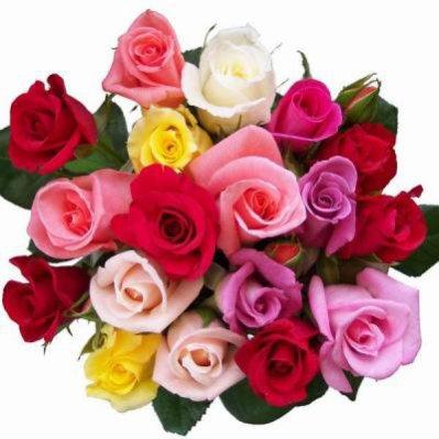 ce tres beau bouquet de roses est pour mon amie 59CIBELINE