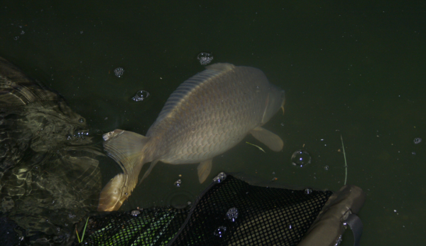 Les poissons frayent, Mai...