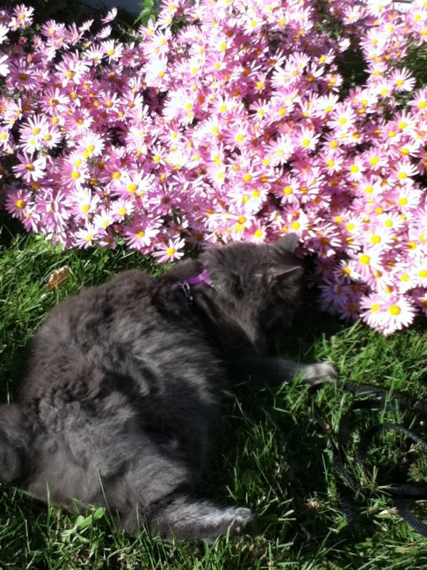mon chere chat de mon coeur