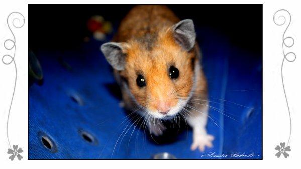 Il était une fois...un Hamster