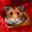 Photo de x-Hamster-Barbouille-x