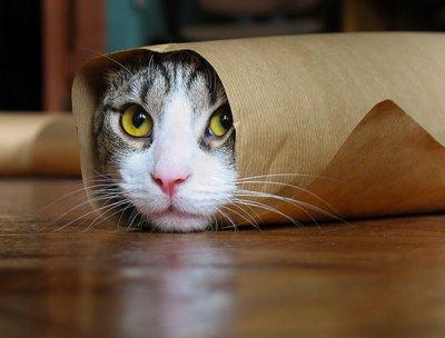 Faire un paquet de Noel avec un chat !! Pour les amoureux du sport = )