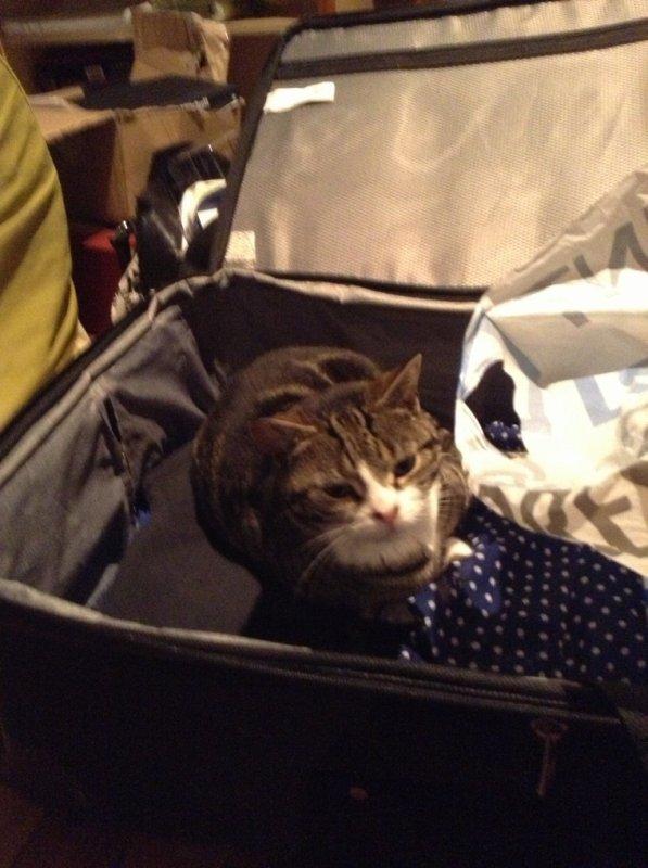 Mon chat veut venir avec moi en Australie