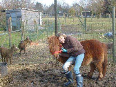 moi et les chevaux ce de l amour