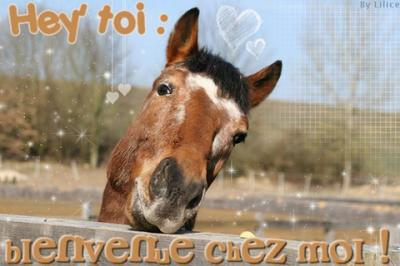 Bienvenue la passion du cheval - Cheval rigolo ...