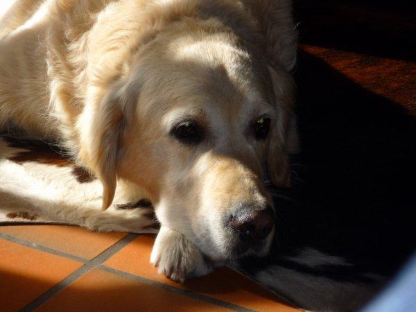 Sam, le chien de ma tante