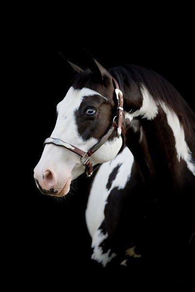 Ce blog est le reflet de ma raison de vivre : l'équitation... J'en suis fière.
