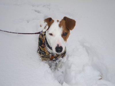 elko dans la neige ce matin!