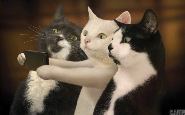 selfi........de chats