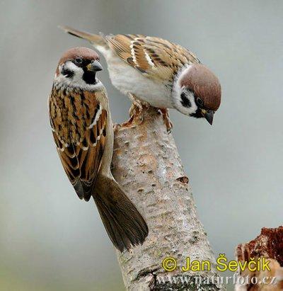 Messieurs les petits oiseaux victor hugo recitations for Les petits oiseaux