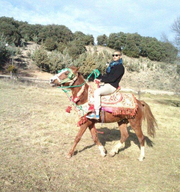 #horse#ifran#city