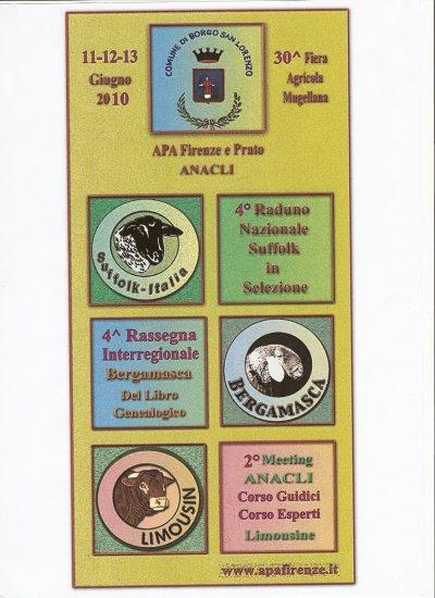 Concours de Moutons suffolk à Florence (IT) où j'ai été invité pour juger en juin 2010