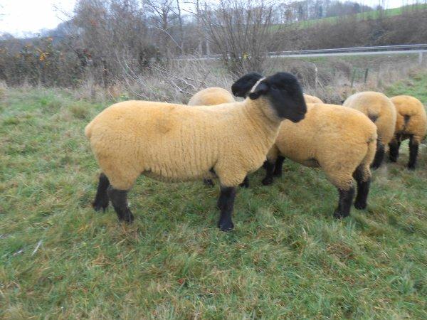nos agnelles