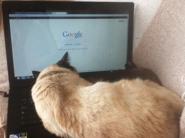 Mon chat n'est pas du tout chiant.