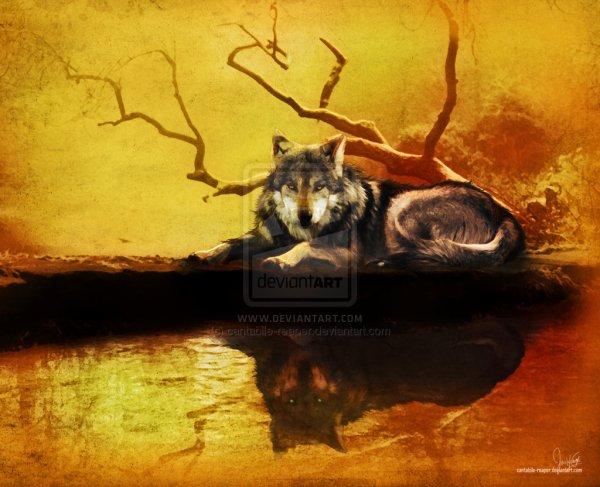 Deviant art , Loup