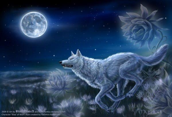 Mon fond d'ecran du moment =) Kiba sous la lune