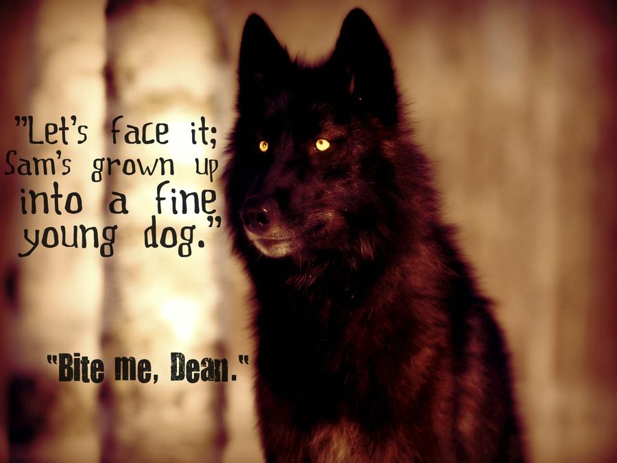 Passion des Loups