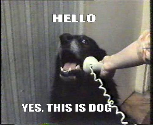 Hello, this is dog !