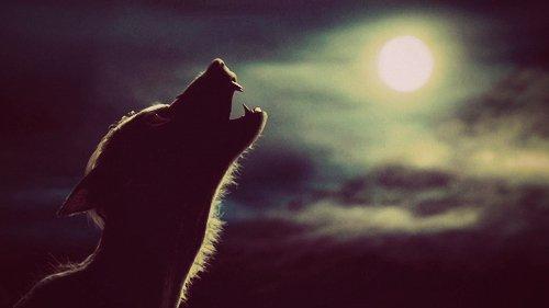 -Chapitre I : Un espoir pour un loup -