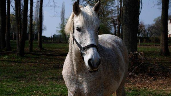Chaqu'un son cheval, chaqu'un son histoire.