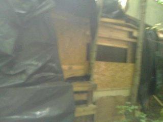Le derrière de la cabane