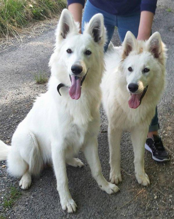 Laïkha et Lutine née a l'élevage