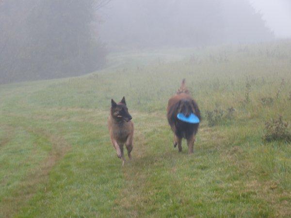 en attendant ballade matinale dans le brouillard