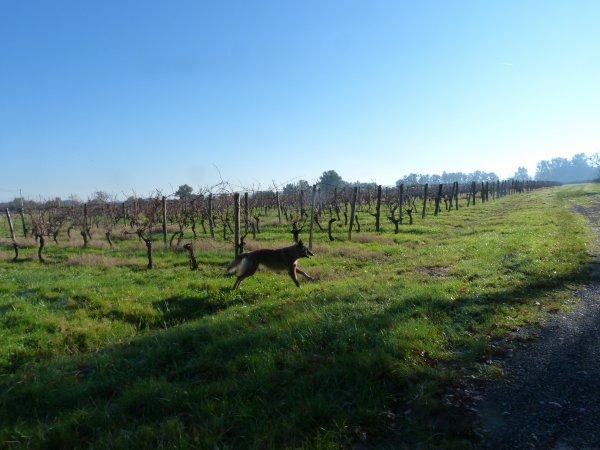 bon et bien ce sera une ballade dans les vignes en attendant,  pour le bonheur des belges